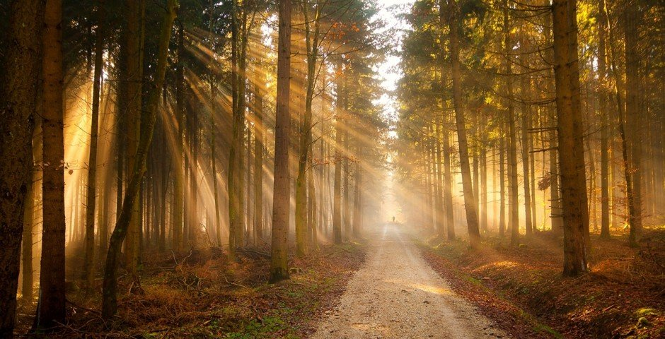 forest_sun_rays_road_trail_silhouette_trees_light_48040_3840x2400